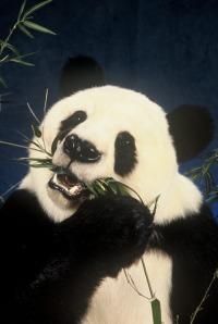 bamboo goooooood